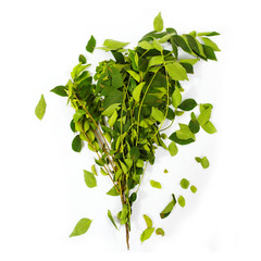 Curry Leaves x 1